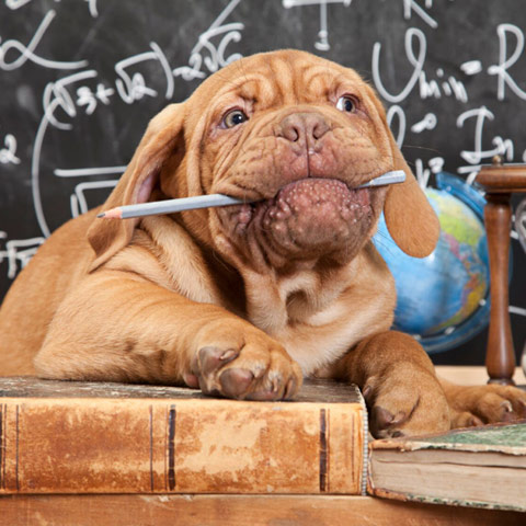 Hundetraining in Ostholstein